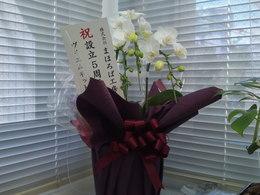 20120313-頂いた花fromvmnet.JPG